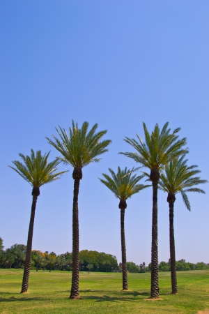 Palm trees in the park Stock Photo