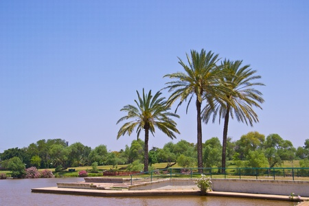 Palm trees by the lake Stock Photo