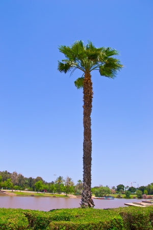 Palm tree by the lake Stock Photo
