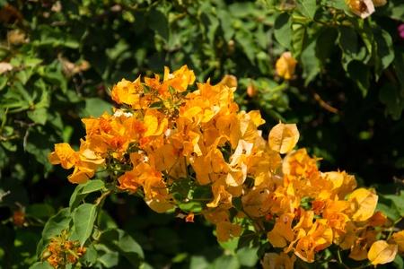 Yellow  spring  flower. Soft focus.