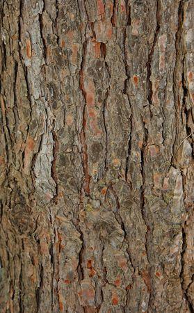 pinetree: Pinetree bark texture Stock Photo