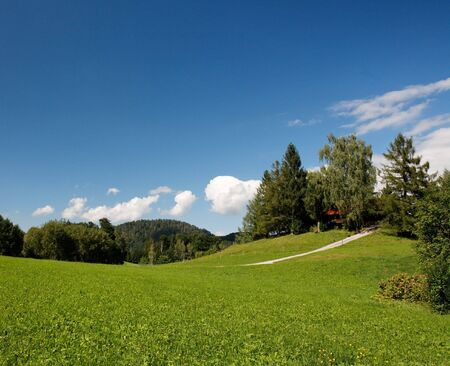 Lush Alpine meadow in bright summer day Stock Photo