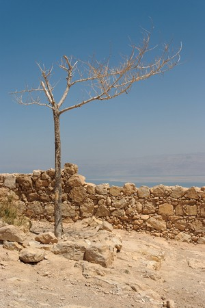 Dry tree on the ruins of ancient fortress in the desert  photo