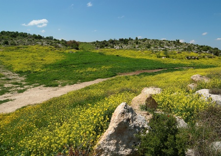Mediterranean hills landscape in spring photo