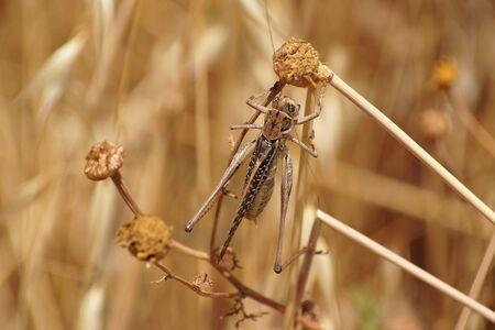 Locust on autumn meadow close-up Stock Photo - 9693890