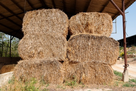 stored: Haystacks at the agricultural farm stored for animal feed
