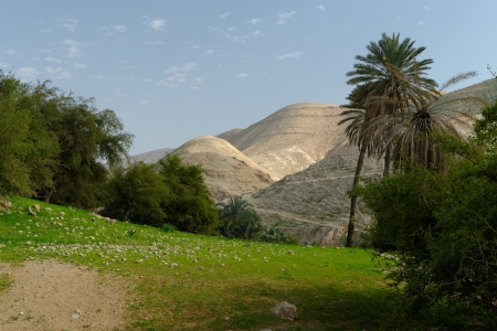 Oasis in Judean Desert at Wadi Qelt near Jericho in spring