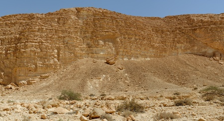 nahal: Acacia trees and bushes at the bottom of the rocky wall in the desert