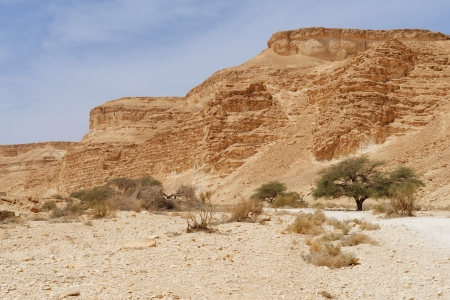 aravah: Acacia trees at the bottom of the desert valley under the striped mountains Stock Photo