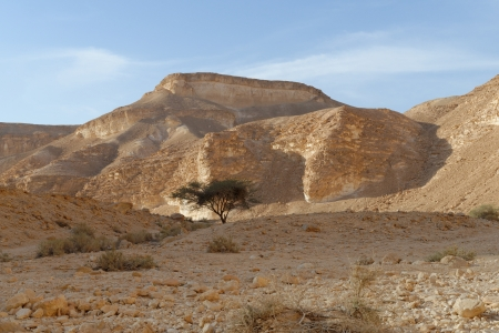 aravah: Acacia tree under the hill in the rocky desert at sunset Stock Photo
