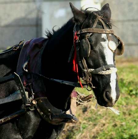 eye: Horse Stock Photo