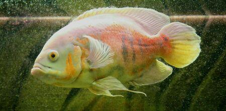 eye: Fish Stock Photo