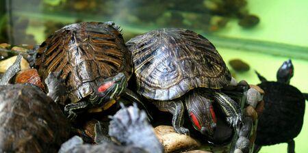 eye: Turtles Stock Photo