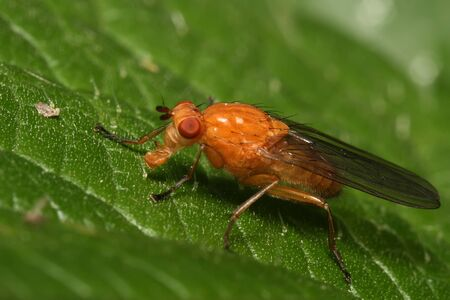 chitin: The yellow fly sits on green sheet. Macro