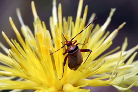 chitin: The bug with long moustaches sits in a yellow flower. Macro Stock Photo