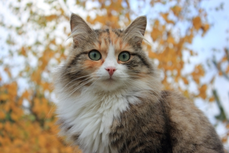 Cat portrait on the autumn background Stock Photo - 15382324