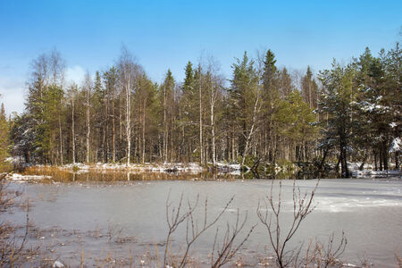popularly: Spring landscape with the quiet river. North Karelia. River Mininka (popularly Manenga)