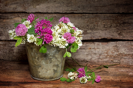 White and red clover on a rustic background photo