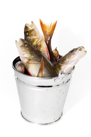 unprocessed: Fresh catch of fish in a bucket. Isolated.
