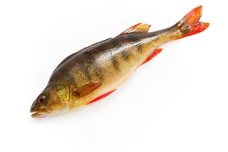 crude: Fresh crude perch on a white background Stock Photo