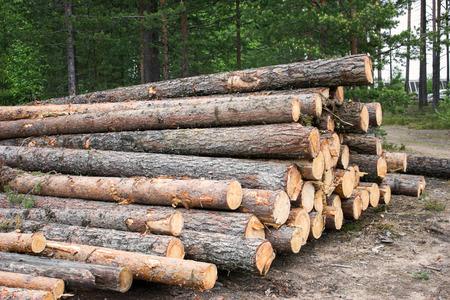 onward: Trozas de madera blanda ponen fuera de la carretera para su posterior transporte Foto de archivo