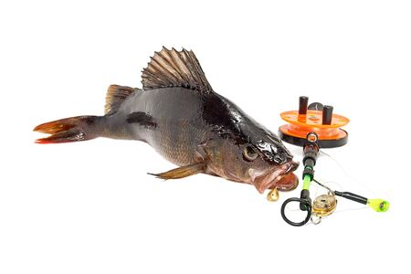 unprocessed: The caught fish on bait on a white background Stock Photo