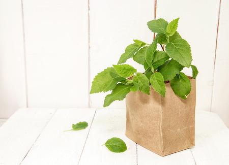 Hydrangea seedlings in paper bag on. Preparing for garden work Stock Photo