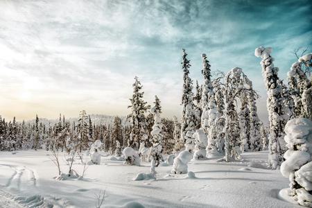 Winter landscape. North Karelia. Russia.