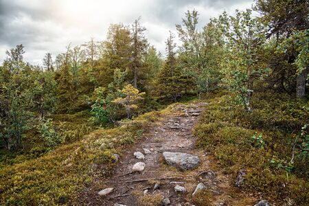 Trail in the mixed forest. Summer landscape. North Karelia. Russia