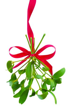 Mistletoe bunch hanged on red ribbon isolated on a white background Stock Photo