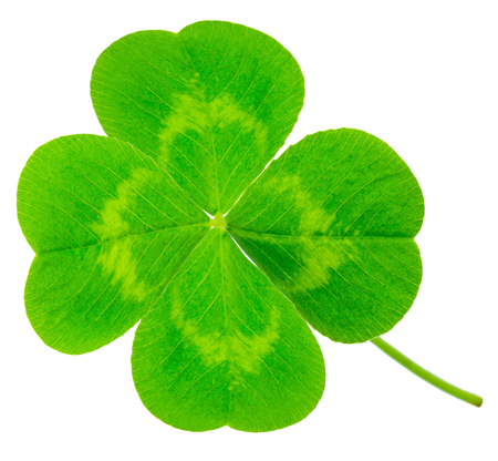 St. Patricks Day symbol. Lucky shamrock clover green heart-shaped leaves isolated on white background Stock Photo