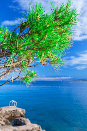 Wonderful romantic summer afternoon landscape coastline sea. Green branch pine tree at the edge of the coast harbor at crystal clear azure water.