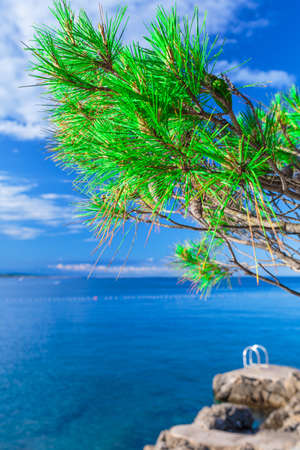 Wonderful romantic summer afternoon landscape panorama coastline sea. Green trees at the edge of the coast harbor at crystal clear azure water.