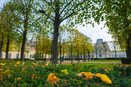 France. Paris. Tuileries gardens near the Louvre in autumn afternoon.