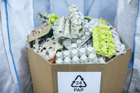 Sorting recyclables. The sorted papier mache - paper pulp egg trays, chewed paper, is placed in a container with the appropriate marking.