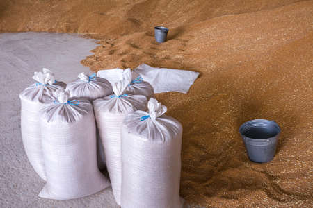 Pile of heaps of wheat grains and sacks at mill storage or grain elevator.