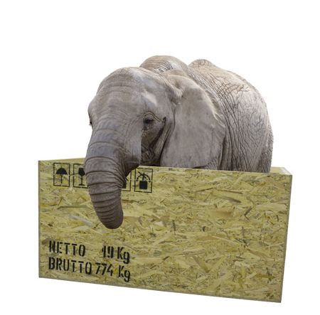 elephant in a box. isolated 版權商用圖片