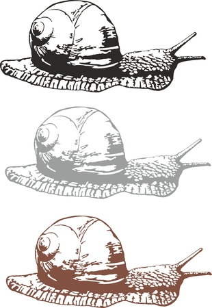Vector illustration of an snail 向量圖像