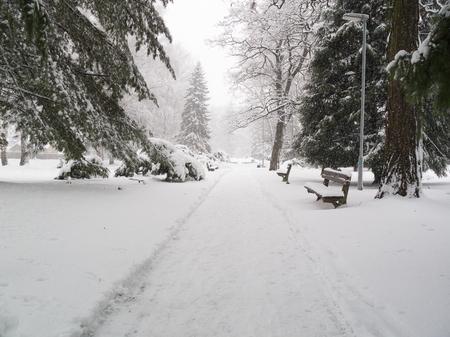 calamity: Snow calamity in park Stock Photo