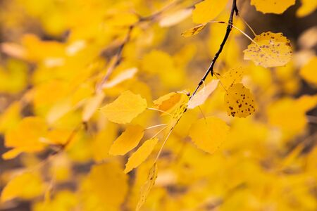 Yellow autumn background. Bright color of autumn.
