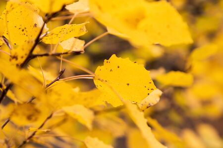 Bright color of autumn. Yellow autumn background. 写真素材