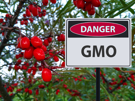 genetically modified red berries and a sign of the danger of GMOs Stockfoto