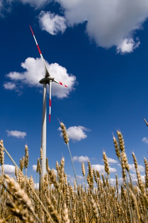 Working wind turbineagainst the blue sky, and wheat photo