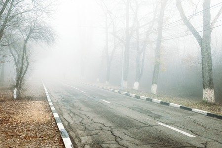 Dangerous road due to fog. road in fog forest.