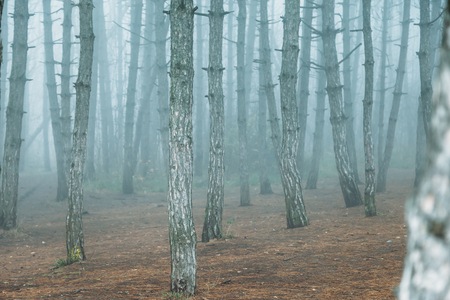 mystical and dramatic fog in forest Stockfoto