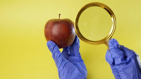 Scientist examining a big red apple, Genetically engineered food concept.