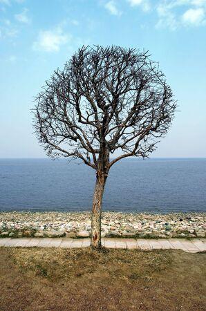 tree on coastline Stock Photo - 4302857