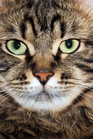 cat snout Stock Photo - 4302856