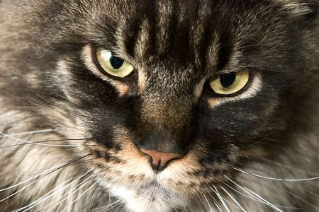 sullenly: the cat snout by the closeup