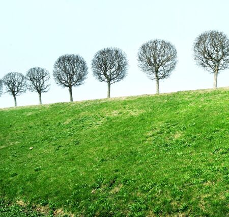 trees on hill Stock Photo - 4362534